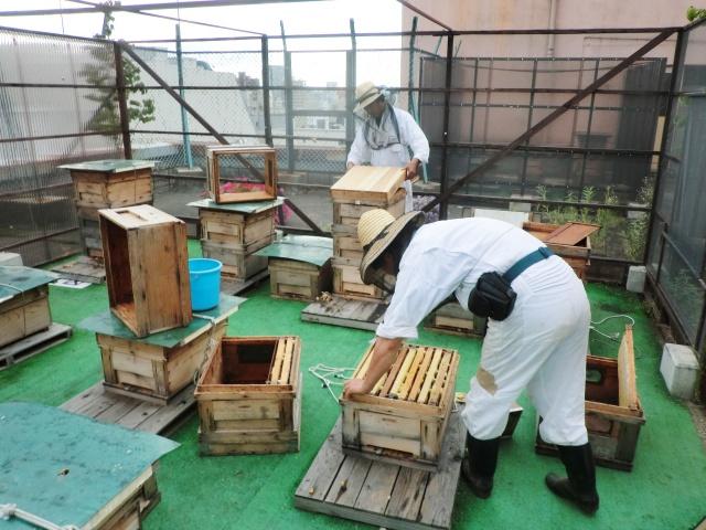 屋上養蜂の現場